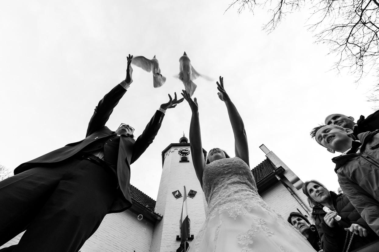 Oplaten van duiven